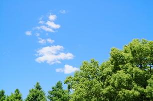 横浜の公園の緑と青い空の写真素材 [FYI01811433]