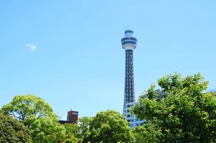 山下公園から見た横浜マリンタワーの写真素材 [FYI01811625]