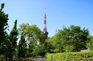 芝公園から見上げた東京タワーの写真素材 [FYI01811641]