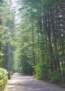 緑豊かな軽井沢の森の写真素材 [FYI01811694]