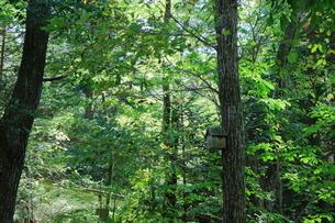 緑豊かな軽井沢の森にある小鳥のおうちの写真素材 [FYI01811765]