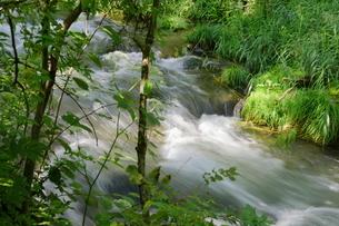 緑豊かな軽井沢のせせらぎの写真素材 [FYI01811799]