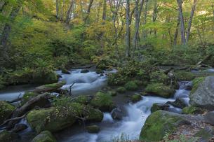紅葉の奥入瀬渓谷の写真素材 [FYI01811822]