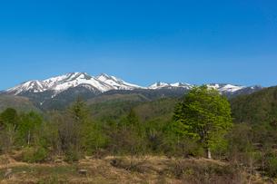 一ノ瀬園地の楓の大木と乗鞍岳の写真素材 [FYI01811847]