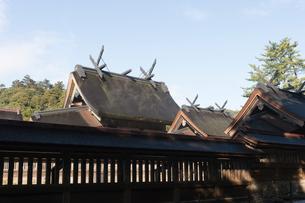 出雲大社の本殿の写真素材 [FYI01811902]