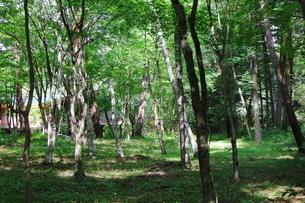緑豊かな軽井沢の森の写真素材 [FYI01812083]