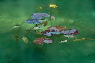 早春のモネの池の写真素材 [FYI01812186]