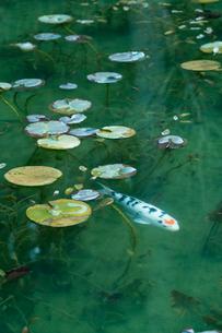 早春のモネの池の写真素材 [FYI01812317]