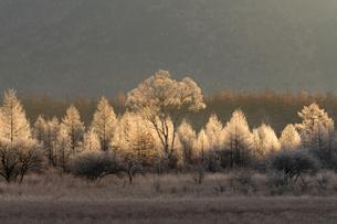 霧氷のシラカバと一条の光の写真素材 [FYI01812335]