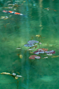 早春のモネの池の写真素材 [FYI01812366]