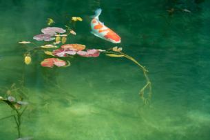 早春のモネの池の写真素材 [FYI01812479]