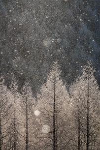 霧ケ峰高原のダイヤモンドダストの写真素材 [FYI01812490]