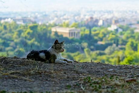 アテネの遺跡をバックにくつろぐネコの写真素材 [FYI01812620]