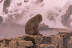 野猿公苑の日本猿の写真素材 [FYI01812646]