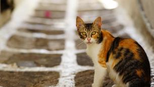 レンズをみつめる子猫の写真素材 [FYI01812652]