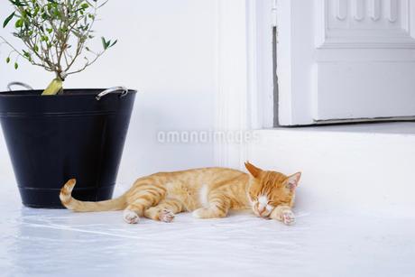 ミコノスタウンのお店の入り口でお昼寝するネコの写真素材 [FYI01812760]