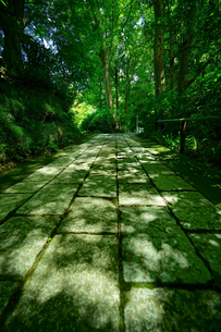 妙本寺の写真素材 [FYI01812845]