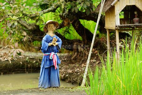 チェンマイのホテルの庭でワイをする藁人形の写真素材 [FYI01812864]