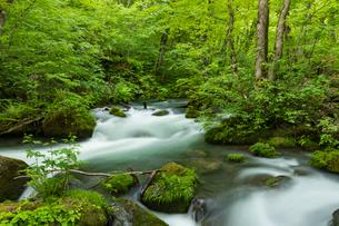 新緑の阿修羅の流れの写真素材 [FYI01812925]