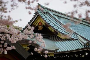 靖国神社の桜の写真素材 [FYI01813033]