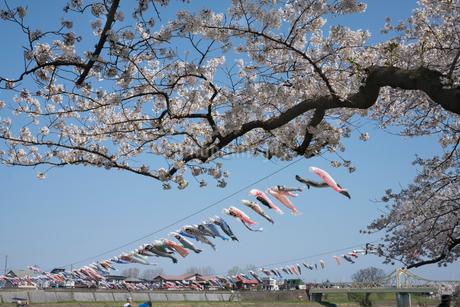 北上展勝地の桜並木の写真素材 [FYI01813040]