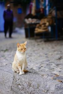 モロッコ シャウエンの猫の写真素材 [FYI01813106]