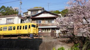 山陽本線と桜の写真素材 [FYI01813209]