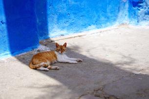 モロッコ ティトゥアンの猫の写真素材 [FYI01813221]