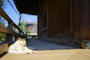 護国寺のネコの写真素材 [FYI01813222]