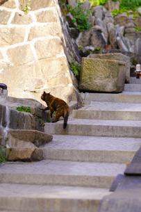 尾道の坂と猫の写真素材 [FYI01813225]