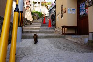 尾道の坂と猫の写真素材 [FYI01813230]