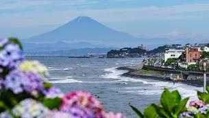 紫陽花富士山の写真素材 [FYI01813252]