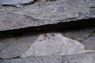 尾道猫の細道の写真素材 [FYI01813273]