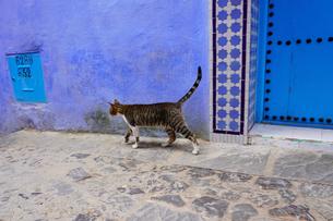 モロッコ シャウエンの猫の写真素材 [FYI01813275]