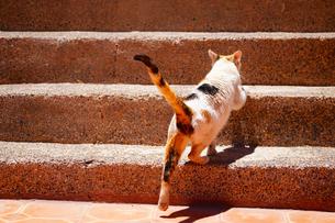 ティシュカ峠の猫の写真素材 [FYI01813313]