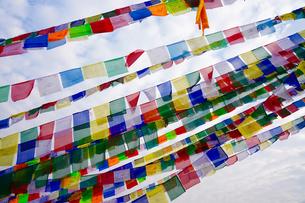 ネパール タルチョの写真素材 [FYI01813325]