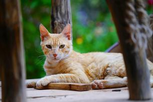 ワルザザードの猫の写真素材 [FYI01813334]