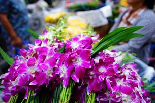 バンコクの沿道で売られるデンファーレの写真素材 [FYI01813346]