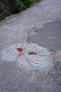 尾道猫の細道の写真素材 [FYI01813365]