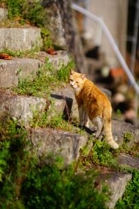 階段を昇る尾道の猫の写真素材 [FYI01813441]
