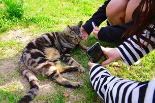 尾道の猫と少女の写真素材 [FYI01813477]