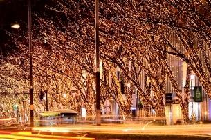 イルミネーションの灯る表参道の写真素材 [FYI01813584]