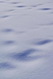 雪原の写真素材 [FYI01813733]
