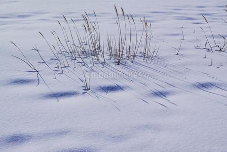 雪原の写真素材 [FYI01813738]