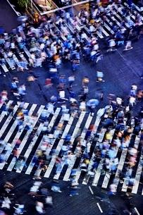雨の日に大勢の人々が傘をさして渡る渋谷のスクランブル交差点の写真素材 [FYI01813871]