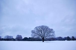 広大な雪原に立つ一本の木の写真素材 [FYI01813898]