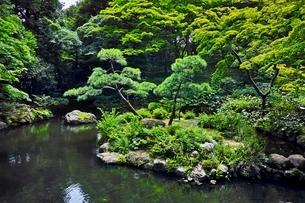 新緑の殿ヶ谷戸庭園の写真素材 [FYI01813935]