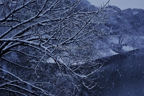 雪が降る千鳥ヶ淵の写真素材 [FYI01813994]
