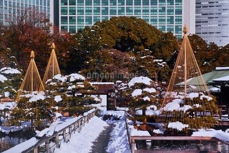 雪積もる浜離宮恩賜公園の写真素材 [FYI01814008]
