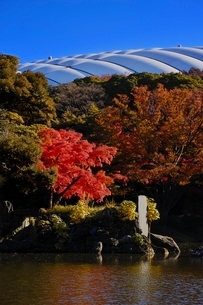 紅葉が美しい小石川後楽園の写真素材 [FYI01814117]